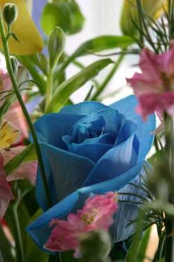 Hoa hồng xanh (Ảnh: owlfish)