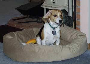 Chó thường đi vòng quanh ổ trước khi ngủ