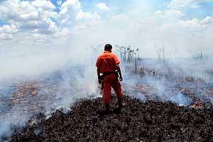 Rừng Amazon bị cháy (Ảnh: greenpeace)