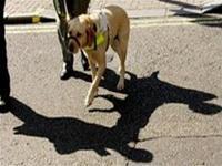 """Những chú chó dẫn đường dành cho người mù có thể sẽ sớm """"thất nghiệp"""" trong nay mai bởi sự xuất hiện của """"giày nhìn thấy"""""""