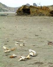 Cá và cua chết trên bãi biển Oregon.