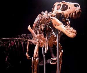 Bộ xương khủng long bạo chúa - Tyrannosaurus rex