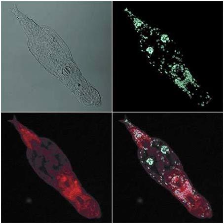 Bdelloid rotifers chuyên sống trong các hồ nước