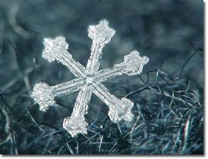 Hoa tuyết: Sự tạo thành kỳ diệu của thiên nhiên