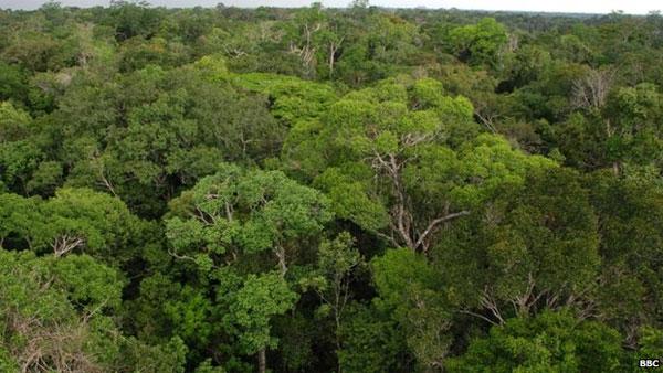 Xây dựng tháp quan sát khổng lồ ở rừng mưa Amazon