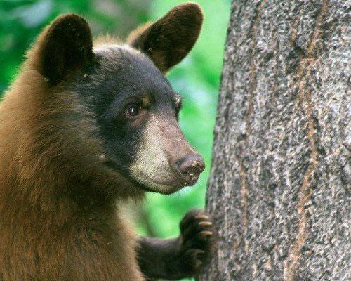 15 loài động vật dễ thương nhưng bạn phải tránh xa