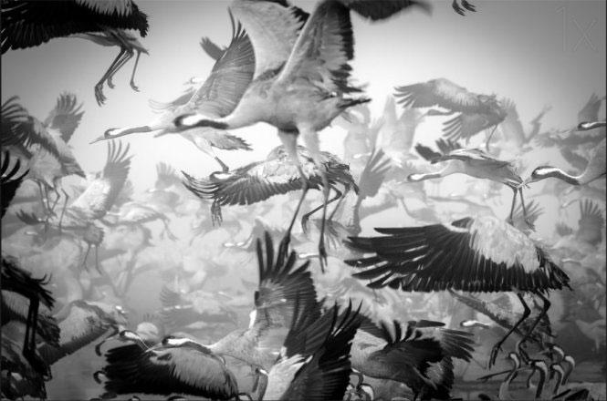 Ngắm ảnh động vật di cư đẹp như tranh