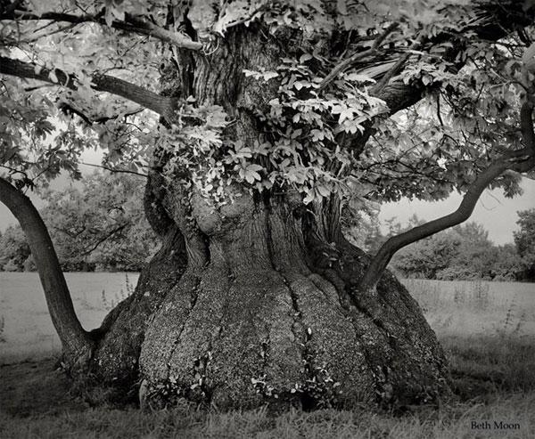 Những cây già nhất thế giới